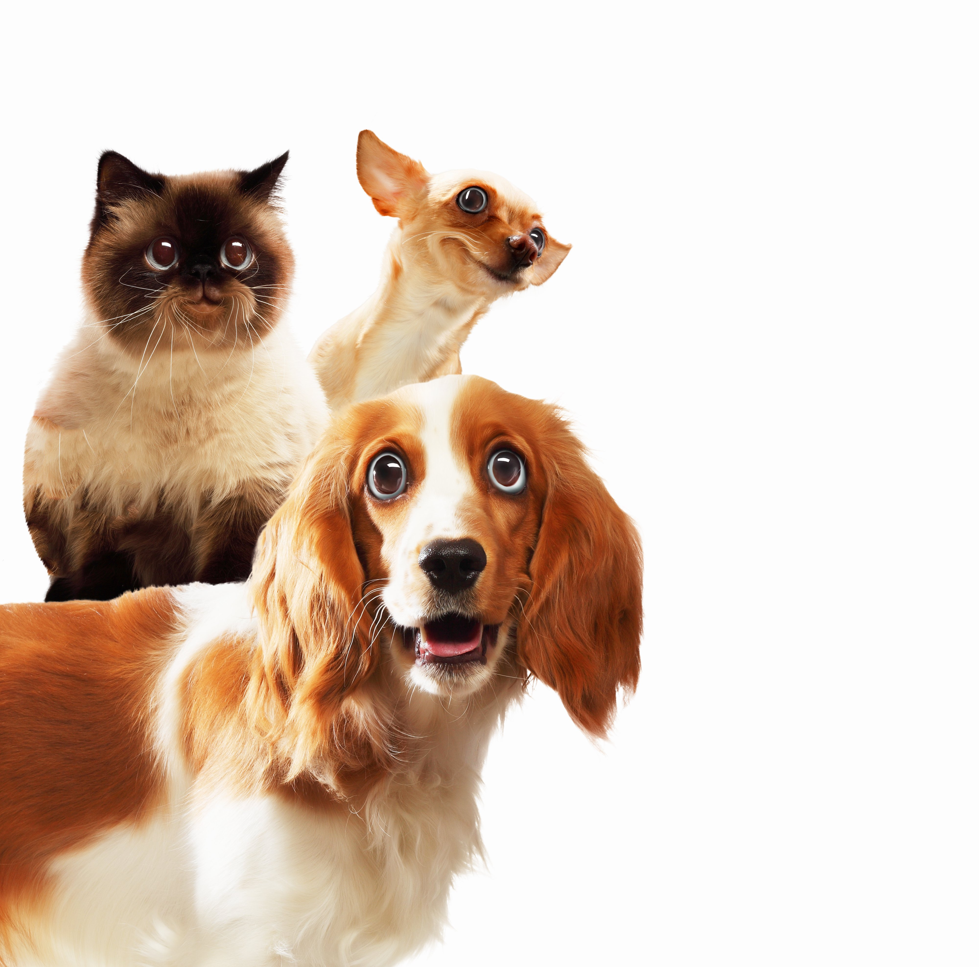 Three home pets next to each other on a light background. funny collag